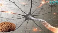 غذاء المخ والأعصاب