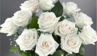 على ماذا يدل الورد الأبيض