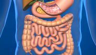 كيف نحافظ على صحة وسلامة الجهاز الهضمي