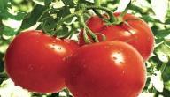 فوائد أكل الطماطم على الريق