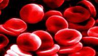 أين تصنع كريات الدم الحمراء