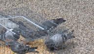 طريقة صنع مصيدة عصافير