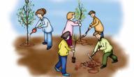 بحث عن كيفية المحافظة على البيئة