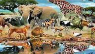أسماء كل حيوانات العالم