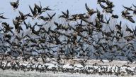 إلى أين تهاجر الطيور عندما يبرد الجو