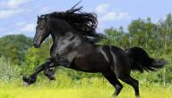 أين توجد أفضل الخيول العربية