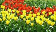 متى يبدأ فصل الربيع