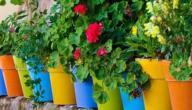 كيف نهتم بالنباتات