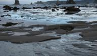 كيف يحدث المد والجزر في البحر