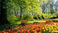 عبارات عن فصل الربيع