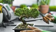 كيف تزرع نباتات الزينة