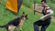 كيف تتم تربية الكلاب