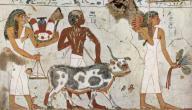 كيف كان يعيش المصريون القدماء