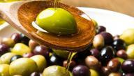 كيف نطور زراعة الزيتون وإنتاجه