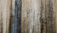 طريقة التخلص من العفن على الخشب