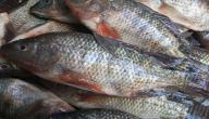 أنواع السمك