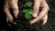 أهمية الزراعة