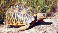 أنواع السلاحف