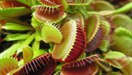 بحث عن نباتات تصيد الحشرات