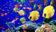 بحث عن الأسماك