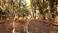 اجمل انواع الكلاب