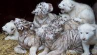 أسباب انقراض الحيوانات