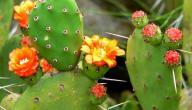 بحث حول النباتات