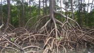 أنواع الجذور