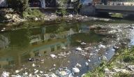 بحث حول تلوث المياه