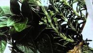 علاج قلة النوم بالأعشاب