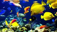 أنواع الأسماك في العالم
