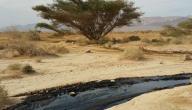 أين يوجد النفط في الأردن