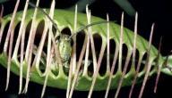 معلومات عن النباتات التي تصيد الحشرات