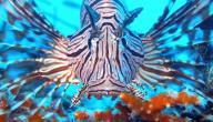 أنواع الحيوانات البحرية