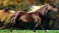 بحث حول الحصان