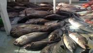 الصيد في مصر