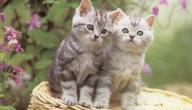 معلومات عن تربية القطط