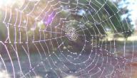 التعريف بسورة العنكبوت