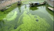 ما أثر موت جميع أنواع الطحالب على الكائنات الحية الأخرى