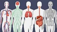 بحث عن جسم الإنسان