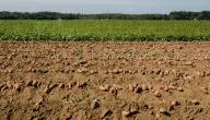 طرق حماية التربة