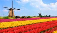بحث عن هولندا