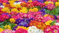 جميع أنواع الورود