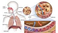 بحث عن أضرار التدخين والإدمان
