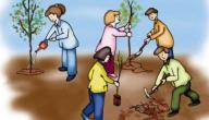 بحث حول المحافظة على البيئة