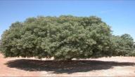 بحث حول عيد الشجرة