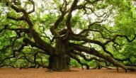 أنواع الأشجار وأسماؤها