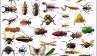 بحث عن الحشرات النافعة والضارة