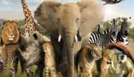 موضوع تعبير عن رحلة إلى حديقة الحيوان