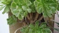 أنواع النباتات وأسماؤها